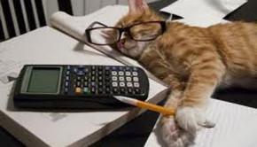 gato_cansado