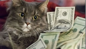 cats-cash-money-3f6d11_thumb
