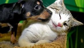 495243-Fotos-de-cachorros-e-gatos-fofos-02