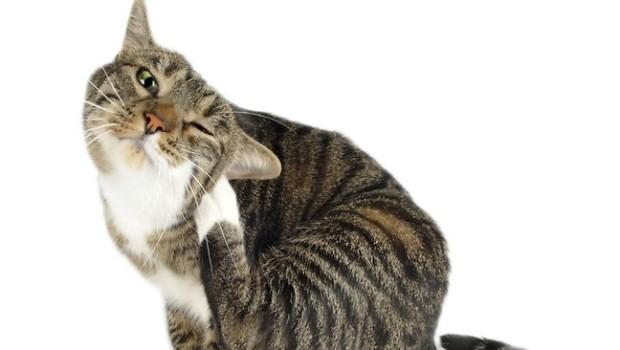 564371-cat-scratching